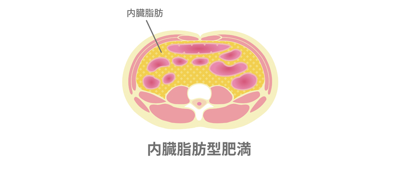 内臓脂肪とは