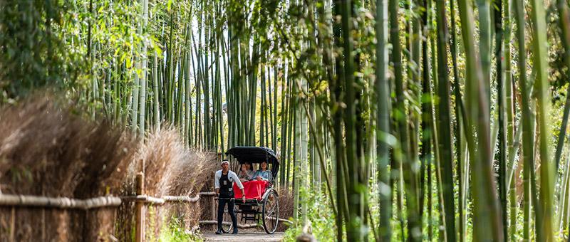 京都の竹林で人力車に乗る女性たち